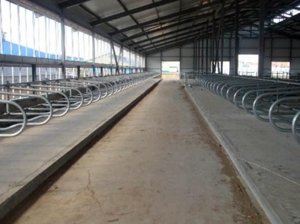 Промышленные полы для ферм